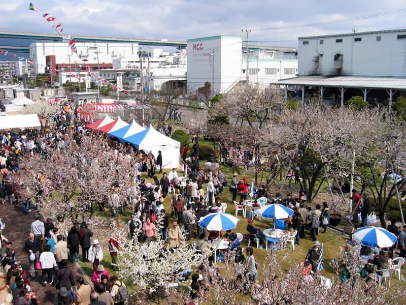 【2020年】アーモンドフェスティバル