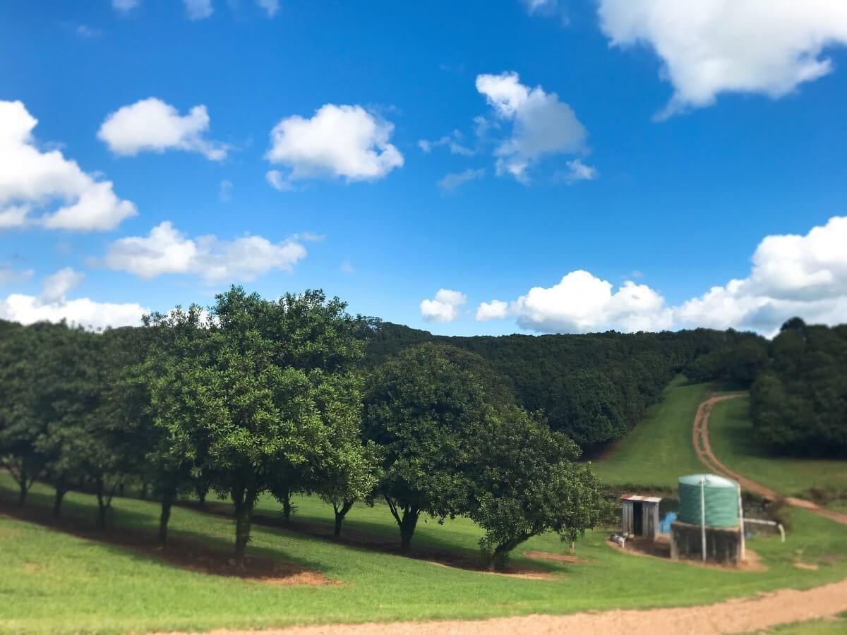 マカデミアナッツ農園を訪問しました その1