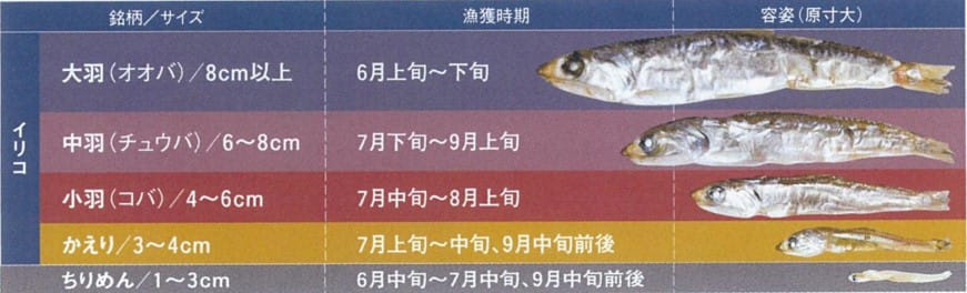 原料カタクチイワシはサイズによりその呼び名が変わります。