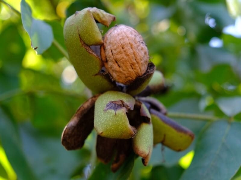 ナッツは種のような見た目をしているものの実は意外な部分を食べています