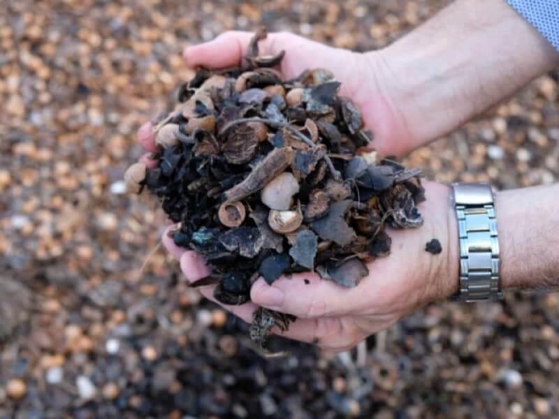 マカダミアナッツ マカデミアナッツ 木 土 肥料 農園 農家 オーストラリア