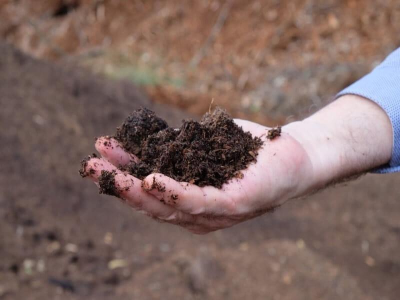 マカダミアナッツ マカデミアナッツ 木 農園 オーストラリア 収穫 実 土 栽培 育てる 農家