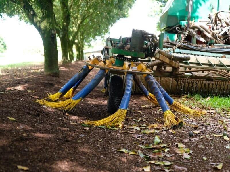 マカダミアナッツ マカデミアナッツ 木 農園 オーストラリア 収穫 実 トラクター